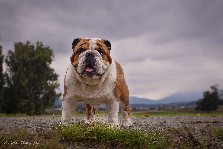 Lenbullan Show Bulldogs |